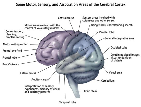 impairment neural developments and symptoms of autism Autism spectrum disorder (asd) manifests in such a wide variety of symptoms, which makes the understanding, diagnosing, and treating of autism-related speech disorders exceptionally difficult due to a constant and complex interaction between the.